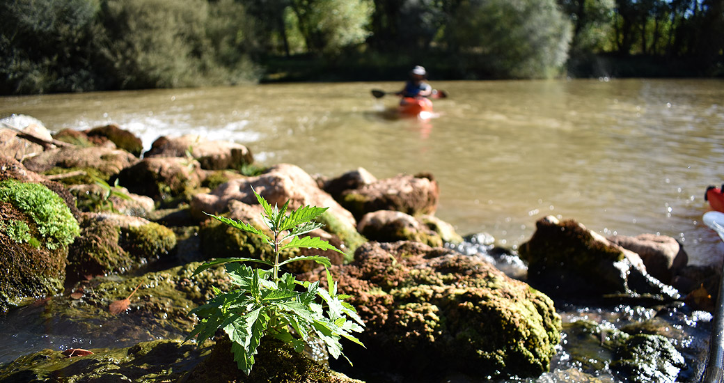 Río Duero en Piragua. Etapa 08